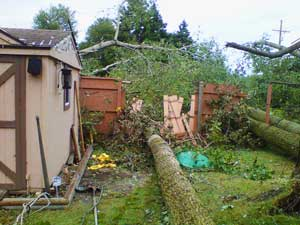 Tree/debris removal