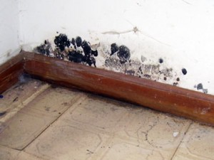 Mold Damage Remediation