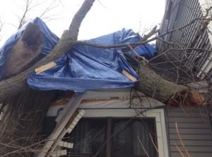 Tree Home Damage Repair